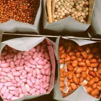 seeds-for-survival.jpg