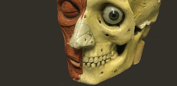 human-head-t50.jpg